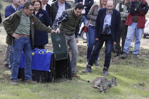 El presidente de la Junta, Juanma Moreno, en la última suelta de un ejemplar de lince ibérico en Doñana.