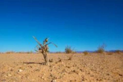 Efectos de la desertificación por el cambio climático.