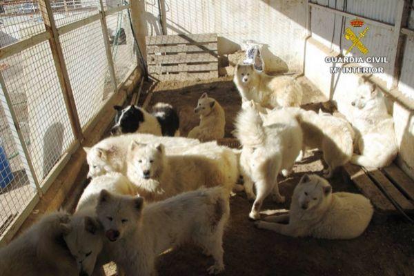 Varios perros enjaulados, hallados por los agentes del Seprona en las instalaciones
