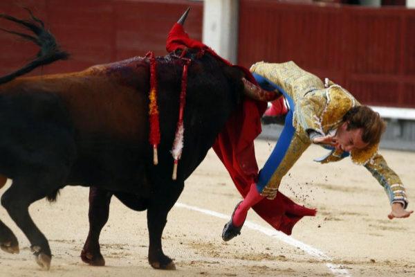 El tercer toro de la corrida de Baltasar Ibán le atraviesa el muslo derecho a Román Collado ayer en Las Ventas.