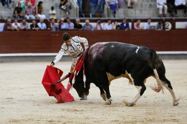 Robleño frente al toro 'Navarro', premiado como el mejor toro de los Desafíos Ganaderos del pasado año.