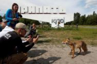 Visitors take pictures of a fox in the abandoned city of Pripyat, near the <HIT>Chernobyl</HIT> nuclear power plant