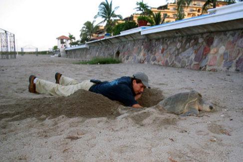 El exilio en España del salvador de tortugas al que persiguen los narcos mexicanos