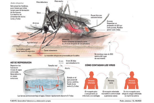 Tres casos de chikungunya en una familia islandesa que estuvo de vacaciones en Alicante en mayo