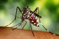 Chikungunya en España: síntomas, causas y medidas para prevenir la infección