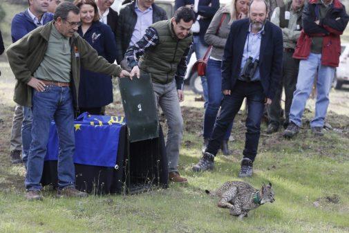 El presidente de la Junta, Juanma Moreno, en una suelta de lince el pasado marzo.