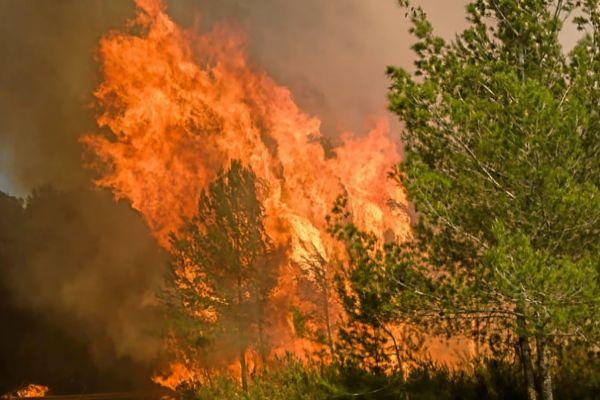 Incendio en la isla de Ibiza en el verano pasado.