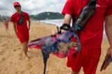 Cientos de medusas carabela portuguesa han aparecido en la playa de Zarautz en julio de 2011.
