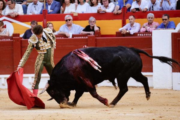 Derechazo de Ginés Marín este viernes en Alicante