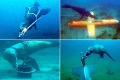 Leones marinos al rescate: así es el proyecto pionero para entrenar a los nuevos 'soldados' del océano
