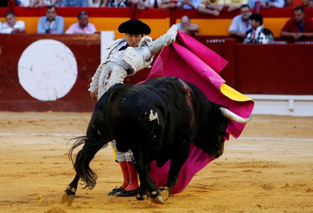 El diestro peruano Roca Rey da un pase con el capote al segundo de su lote, durante la corrida de la Feria de Hogueras celebrada este sábado en la plaza de toros de Alicante.