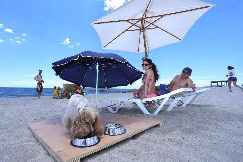 En 2016 nació, oficialmente, la primera playa para perros de...