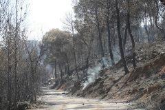 GRAFCAT1579. FLIX (<HIT>TARRAGONA</HIT>).- Aspecto de una zona afectada por el incendio de la Ribera d'Ebre, que sigue descontrolado tras afectar desde anteayer más de 6.500 hectáreas.