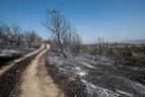 Imagen de la devastación creada por el incendio de Toledo.