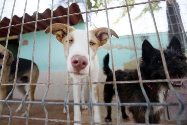 """Multitud de perros abandonados y en estado de desamparo son acogidos para la posterios adopción en la Asociación protectora de animales """"Asoka El Grande"""""""