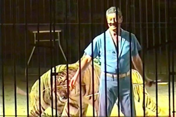Ettore Weber durante un espectáculo circense con tigres.