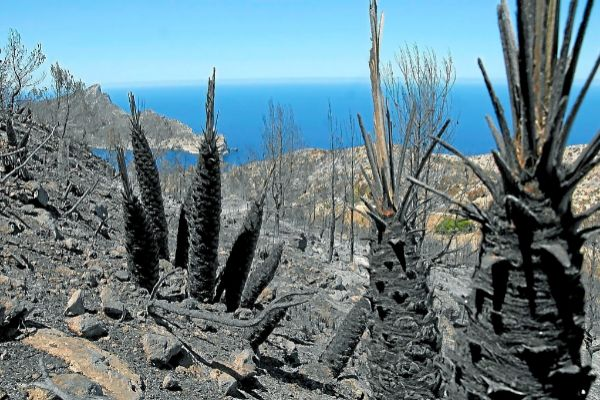 Territorio arrasado por el fuego en Mallorca.