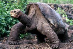 ¿Por qué una persona vive 80 años y una tortuga 200? Un equipo español descubre  la respuesta