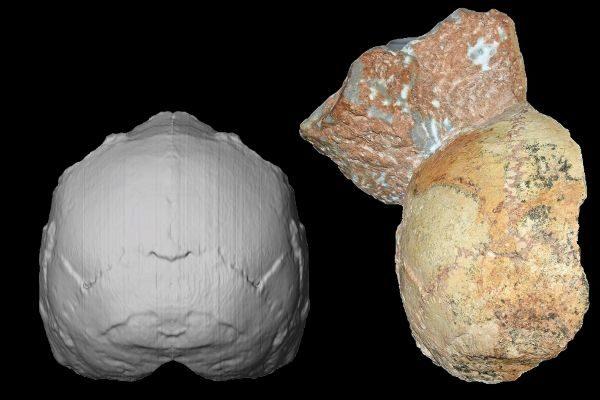 Vista del cráneo Apidima 1, de hace 210.000 años (derecha) y reconstrucción