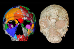El hombre moderno llegó a Europa 150.000 años antes de lo que se creía
