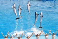 Las nadadoras de sincronizada, junto a los delfines del Oceanogràfic.