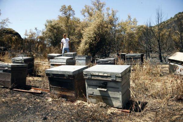 El hijo del apicultor comprueba el estado de las colmenas.