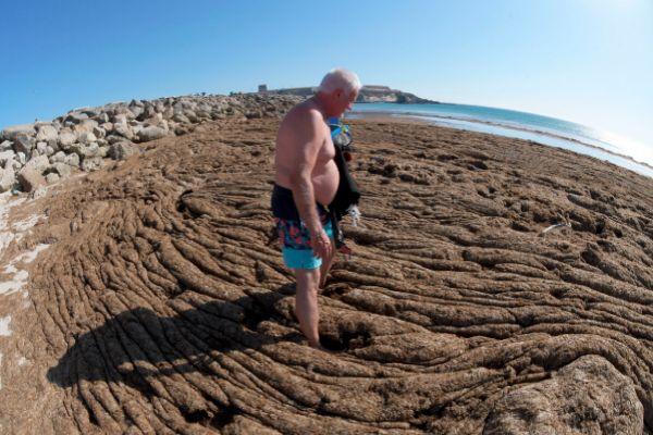 Un bañista rodeado de la montaña de algas 'Rugulopterix okamurae' que el mar ha depositado esta semana en una playa de Tarifa.