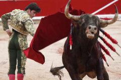 El toro 'Tinajón' de la muleta de José Garrido en un pase por alto este sábado en Pamplona.