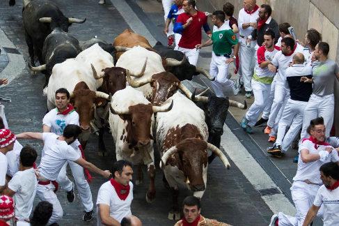 Los cabestros abren camino a los toros de Miura, este domingo en Pamplona.