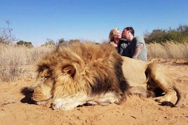 Una pareja canadiense se besa ante el cuerpo de un león.