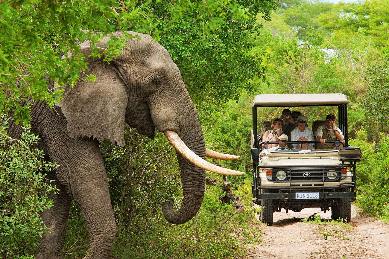 Un safari por el continente africano es algo que hay que hacer una vez...