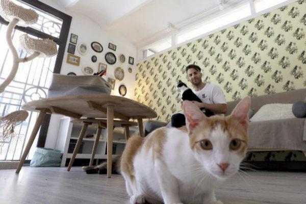 """El refugio de los gatos djs: """"Hay una persona ideal para cada felino"""""""