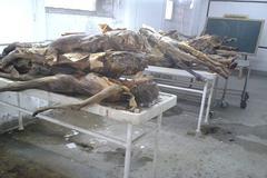 Cadáveres apilados en Medicina, en 2014.
