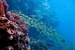 Una imagen submarina de un arrecife.