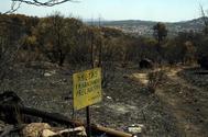 Zona afectada por el incendio de Cadalso de los Vidrios.