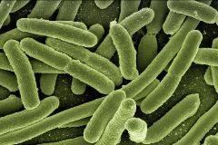 Microscopía electrónica de la bacteria intestinal 'E.coli'.