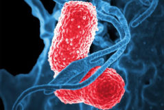 Bacteria Klebsiella pneumoniae