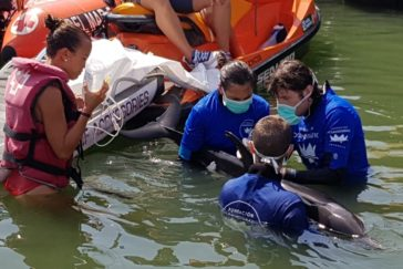 Rescate del delfín listado en la bocana del Turia