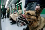 Un vigilante de seguridad con un perro, en el Metro de Madrid.