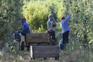 Temporeros en Alcarràs