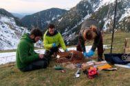 El equipo científico durante la toma de muestras de rebecos.