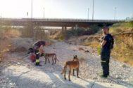 Dos agentes del SPEIS de Alicante con sendos perros de la Unidad Canina