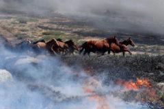 El heroico bombero piloto que salvó a 27 caballos de morir calcinados