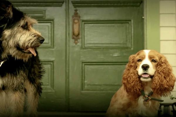 Imagen del 'remake' de La dama y el vagabundo, cuyos personajes ya han...