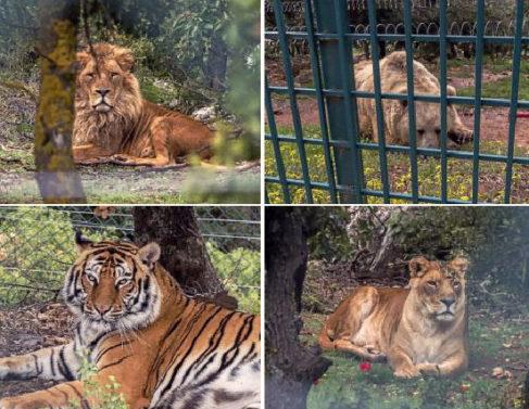 El arca de Noé de los animales víctimas del Estado Islámico
