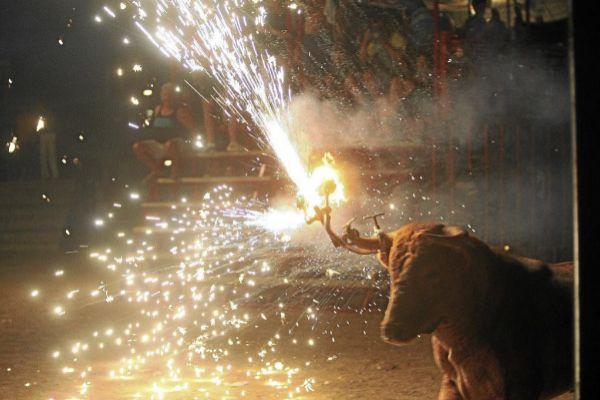 Imagen de archivo de un 'bou embolat' en Sant Jaume d'Enveja