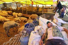 Contando ovejitas antes del sacrificio
