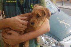 El perro rescatado por los agentes tras ser tirados al río