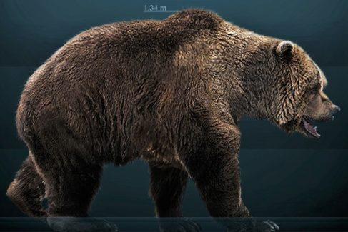 Un estudio revela cómo se extinguió el legendario oso de las cavernas