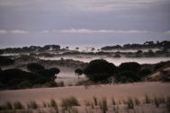 Dunas y pinares característicos de Doñana.